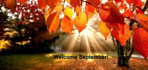 Welkom September tarotlezing vallende bladeren