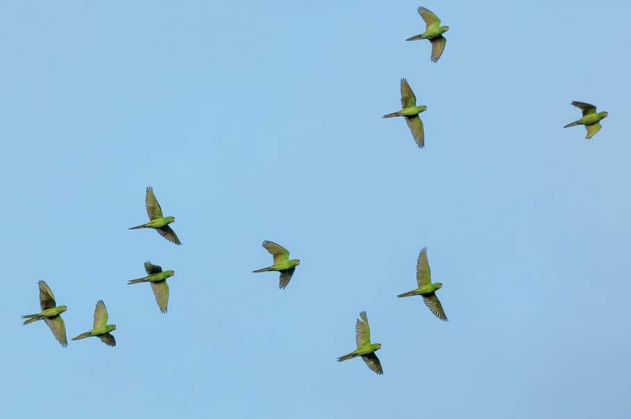 Vogels tegen blauwe lucht