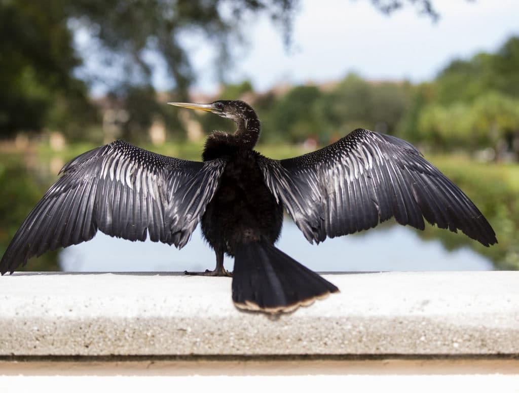 Vogel op railing tarot