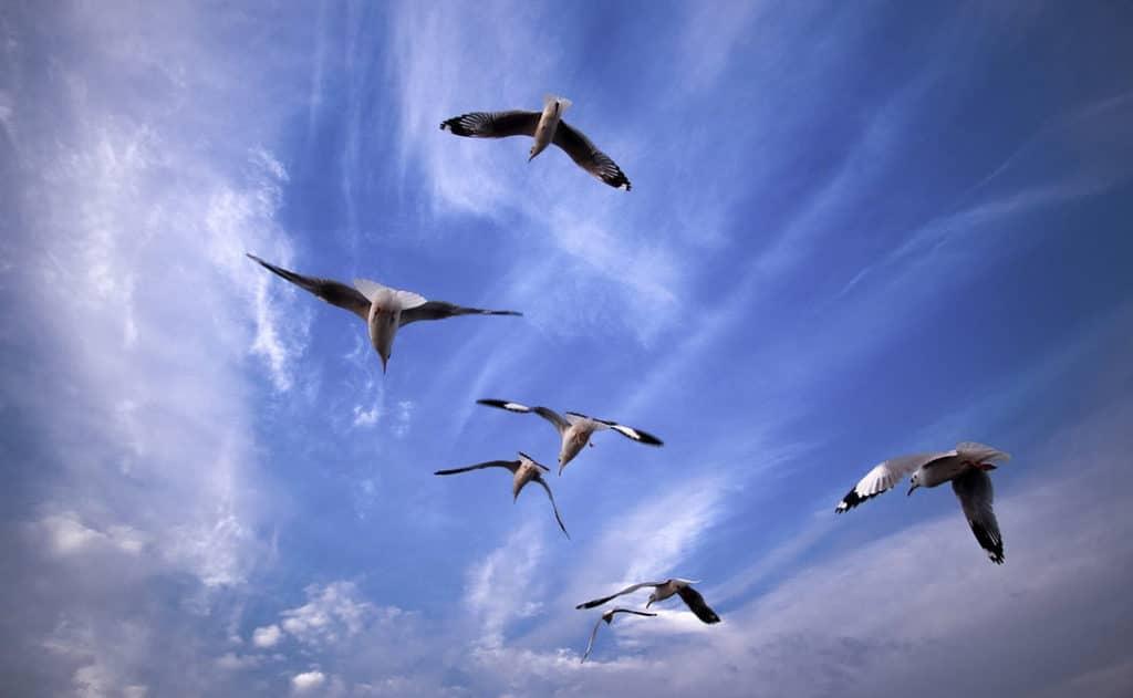 Vogels in vlucht tarot orakel