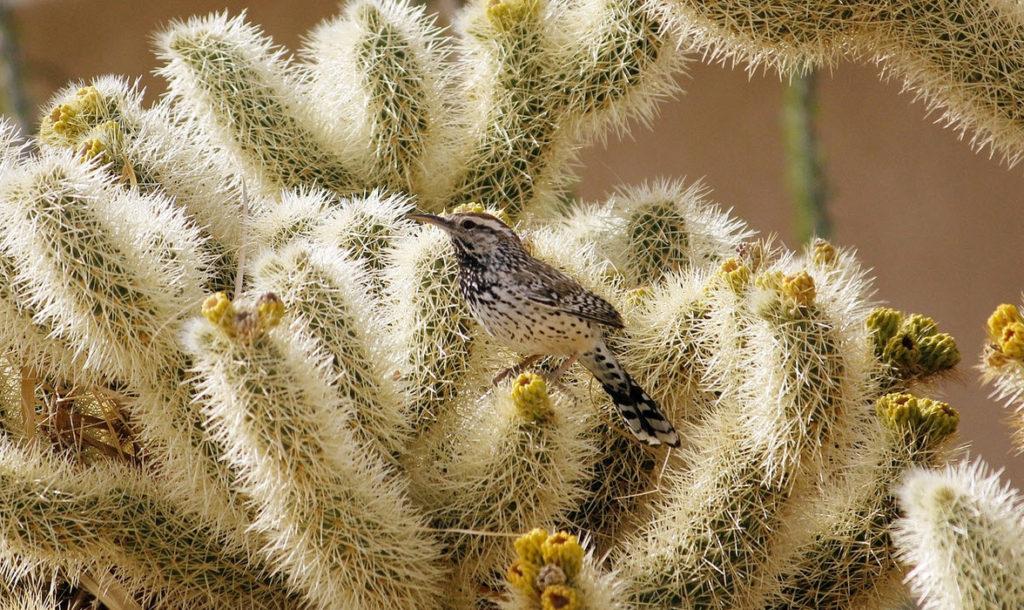 Vogel Tarot: Vogel op cactus