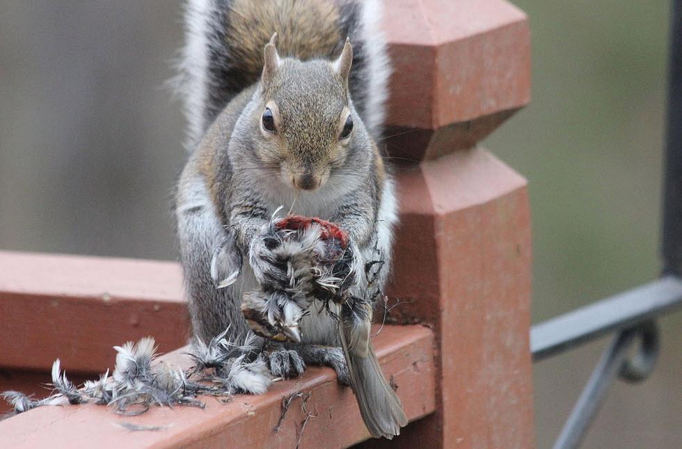 """""""Blije eekhoorn"""" eet vogel tarot"""