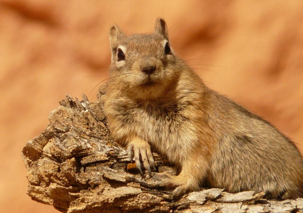 blije eekhoorn happy squirrel birds tarot