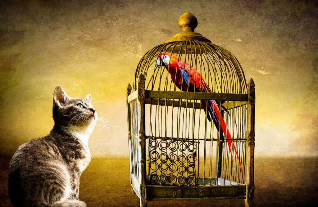 tarot vogel in kooi en kat ervoor