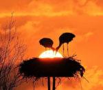 vogel tarot zon achter vogels
