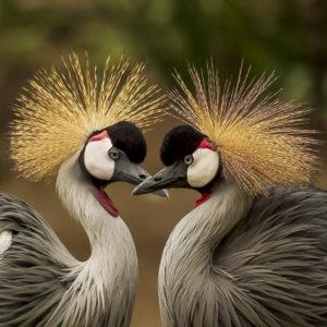 Vogel Tarot, superleuk en uniek voor Tarot Stap voor Stap